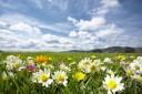 Blütentherapie nach Dr. Edward Bach